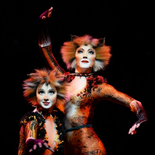 CATS the Musical , Auckland Events